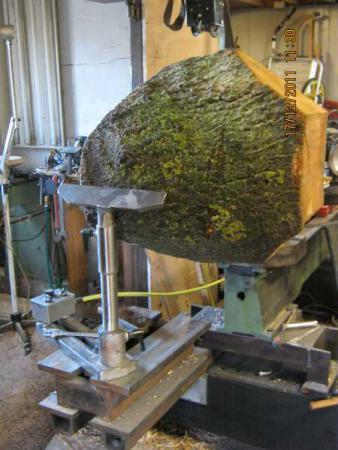 foto van een halve essen boomstam