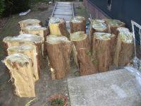 foto van hout halen2