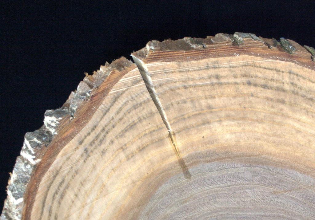 een op mijn houtdraaibank handgemaakte schaal in hout van een iep van 40-54 cm diameter, 9-16 cm hoog, 15 mm dik